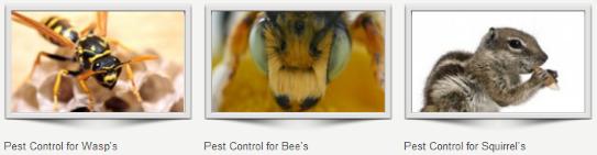 Pest control companies Keston