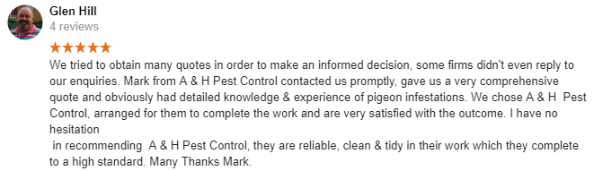 south woodham ferrers pigeon control