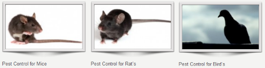 Pest Control Crawley