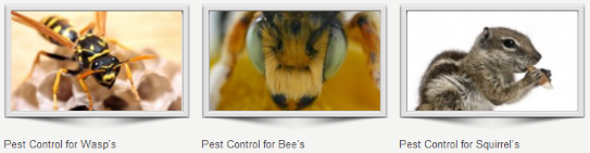 Pest control companies Petts Wood
