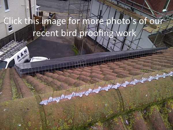 Pigeon Barrier