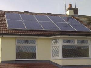 solar panels pigeon problem