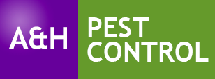 wasp control bexleyheath